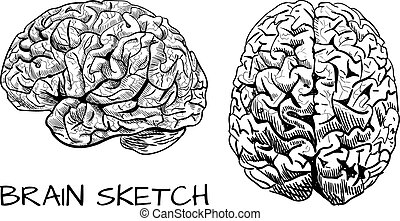 Brain sketch. VECTOR colored hand drawn human brain. Line work, pink. Front and side view. Black.