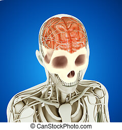 Brain parts the human brain has many properties that are common to the human brain has many properties that are common to all vertebrate brains including a basic division into three parts called the forebrain midbrain ccuart Images