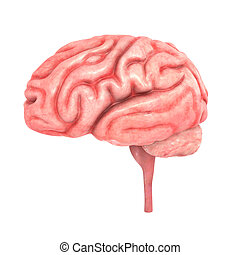 Property brain businessman with a brain for real estate stock the human brain has many properties that are common to all vertebrate brains including a basic division into three parts called the forebrain midbrain ccuart Images