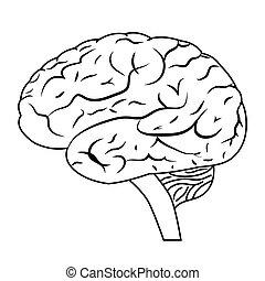 Vector illustration of a human brain. EPS 8.