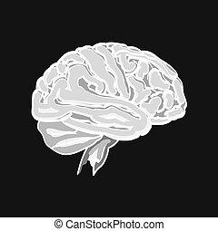 Brain vector illustration
