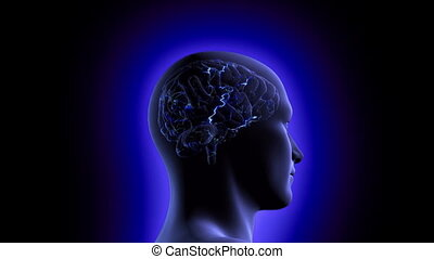 A 1080p resolution stock video brain inside a man's head showing neuron activity increase then camera pans around and into the head