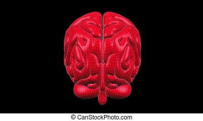 Brain Wireframe Red 15