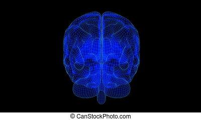 Brain Wireframe Xray Blue19