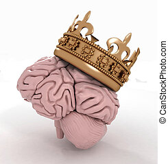 brain with crown on a white