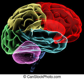 X-ray image of a human head brain