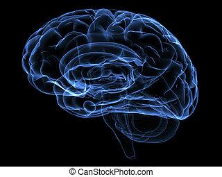 Brain - Xray image of a human head brain