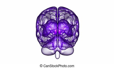 Brain XRay Purple 12