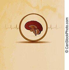 brains and cardiogram