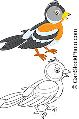 Bramble finch - Brambling, color and black and white...