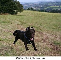 Bramble  the flying dog