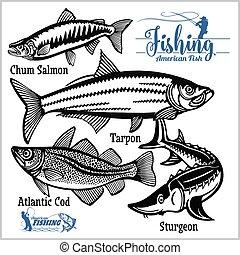 branca, bacalhau, jogo, atlântico, pesca, amigo íntimo, eua...