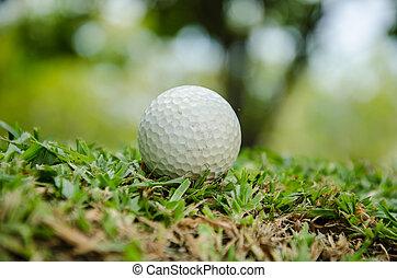 branca, bola golfe