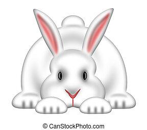 branca, bunny easter, fundo, isolado