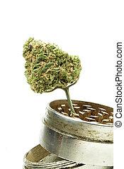 branca, cannabis, marijuana, fundo