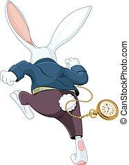 branca, coelho running, afastado