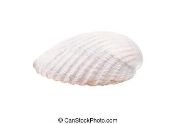 branca, concha, isolado, mar