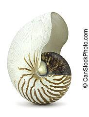 branca, concha, nautilus
