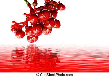 branca, fruta, isolado, vermelho