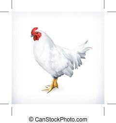 branca, galinha