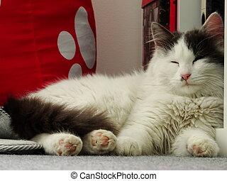branca, gatinho, macio, dormir