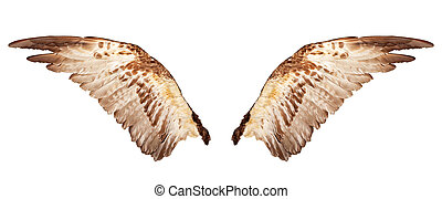 branca, isolado, asas, dois