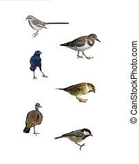 branca, isolado, pássaros, seis