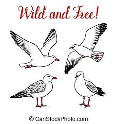 branca, jogo, gaivotas, isolado, fundo