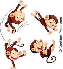 branca, jogo, macaco, fundo