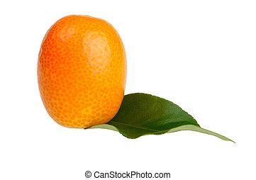 branca, kumquat, fundo