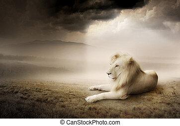 branca, leão, em, pôr do sol