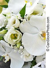 branca, orquídea