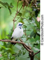 branca, pássaro exótico, uma filial