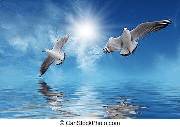 branca, pássaros voando, para, sol