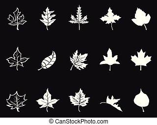 branca, pretas, maple, fundo, ícones