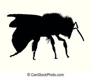 branca, silueta, fundo, abelha
