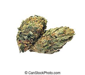 branca, terapêutico, experiência., marijuana, cannabis.,...