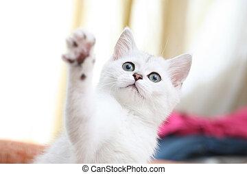 branca, tocando, gatinho