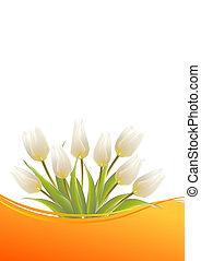 branca, tulips, ligado, um, cartão, para, aniversário