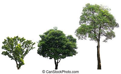 branca, verde, isolado, árvores
