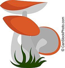 branca, vetorial, cogumelos, ilustração, experiência.