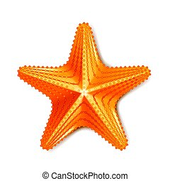 branca, vetorial, isolado, starfish