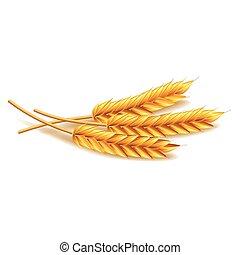 branca, vetorial, trigo, isolado