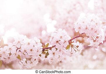 branch, blomster, blooming, kirsebær, forår