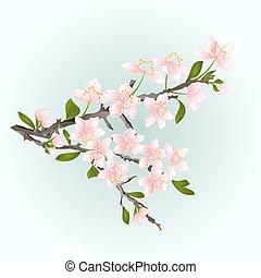 Branch cherry sakura vector
