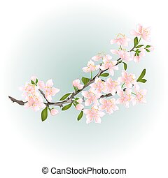 Branch cherry with blossoms vector
