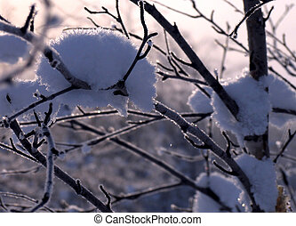 Branch close up in the snow.