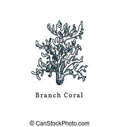 Branch coral vector illustration.Drawing of sea polyp on white background.