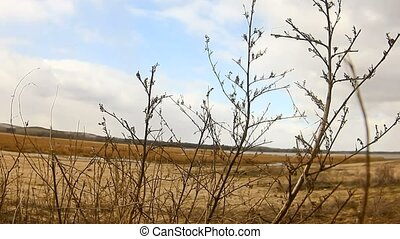 branch dry grass on a background of blue sky sand