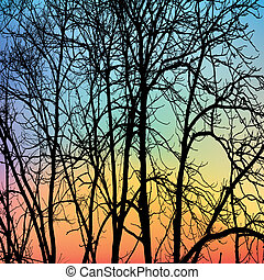 Branch - The branches of winter trees on sky background